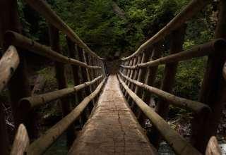 Bridge Descent Trees Wallpaper