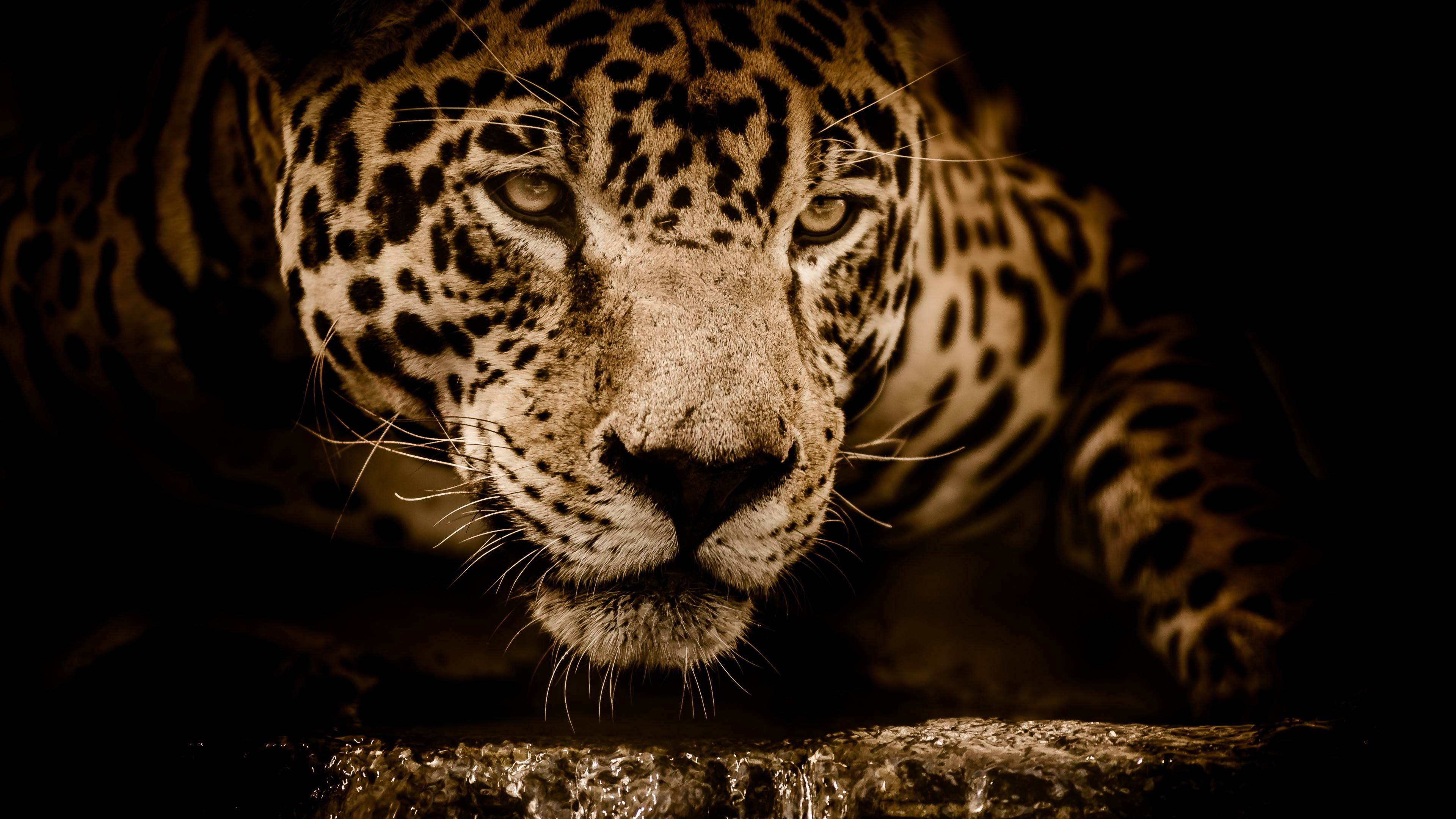 Amazing Jaguar Wallpaper
