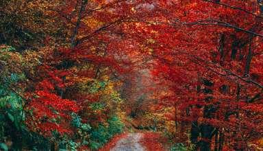 Autumn Trail Foliage Fallen Wallpaper