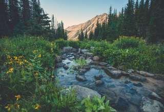 Creek Flowers Mountains Grass Wallpaper