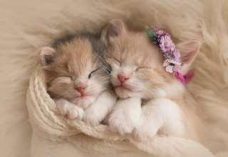 Cute Kittens Adorable Wallpaper
