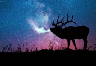Deer Silhouette Galaxy Stars Wallpaper