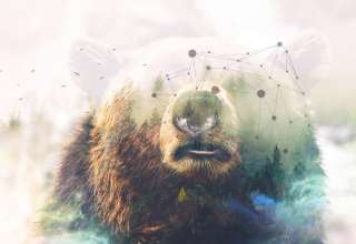 Grizzly Bear Forest Photoshop 4k Wallpaper