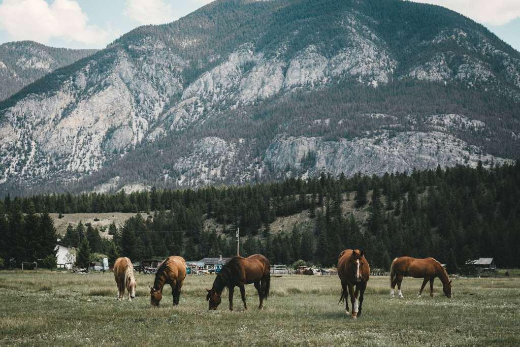 Pasture Horses Mountains Wallpaper