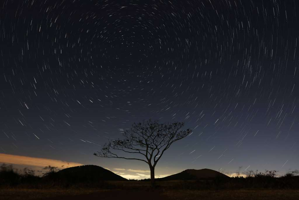 Starry Sky Tree Sky Night Wallpaper