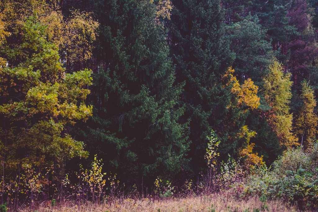 Trees Forest Autumn Grass Wallpaper