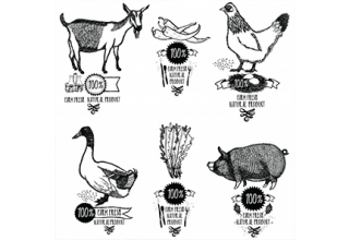 دانلود وکتور Set Farm Fresh Natural product Chicken Goat Duck Pig