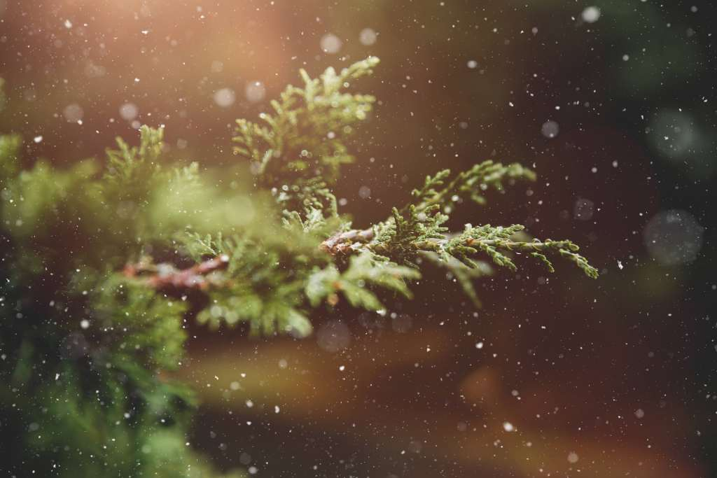 Advent Blur Branch Bright Wallpaper