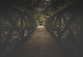 Bridge Board Trees Wallpaper
