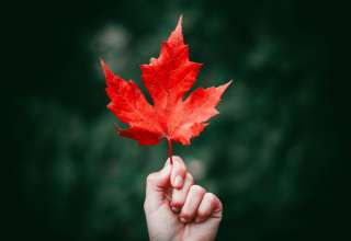 Maple Leaf Autumn Hand Wallpaper