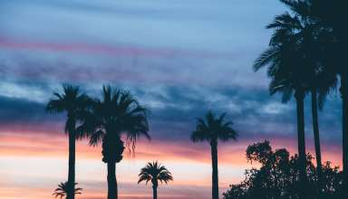 Palms Sunset Sky Wallpaper