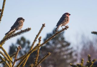 Two Sparrows on Branch Close-up Photography Wallpaper