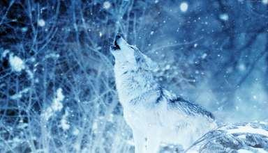 Wolf Winter Snow 4k Wallpaper