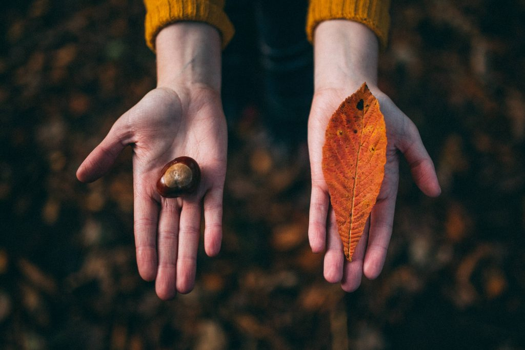 Woman holding her hands out holding a leaf and a conker in the fall
