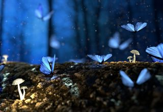 Butterfly Mushrooms Forest Fantasy Wallpaper