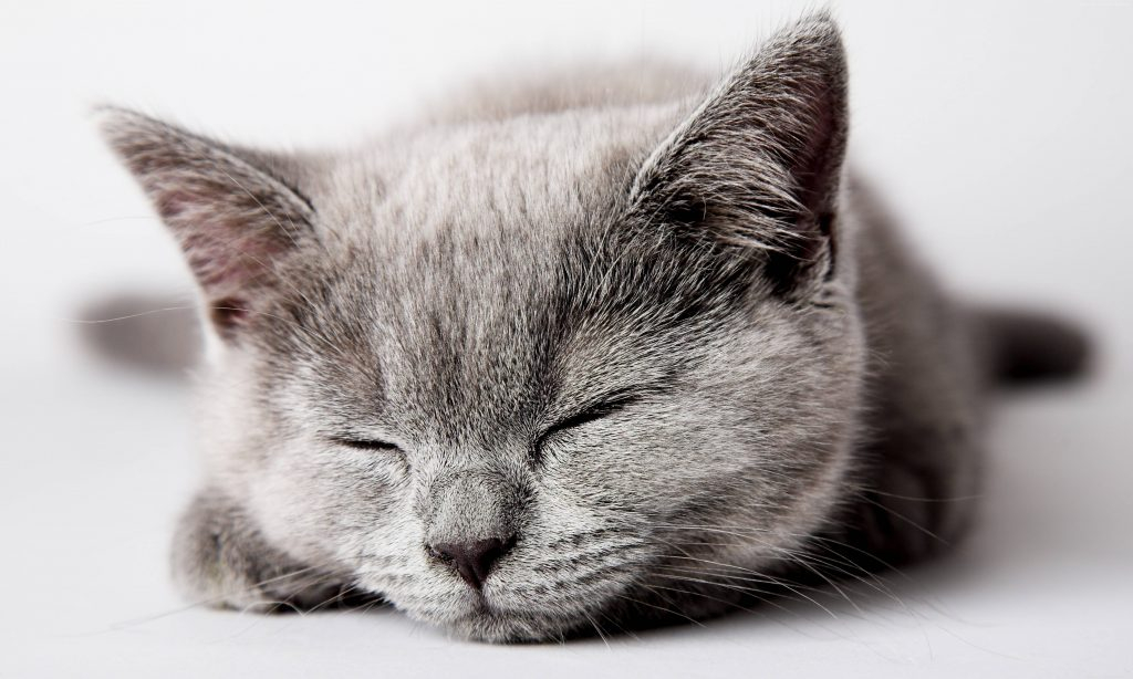 Cat Cute Sleep Wallpaper
