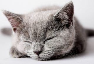 Cat Cute Sleep Wallpaper