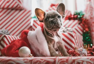 Christmas New Year Puppy Cute Animals 5k Wallpaper