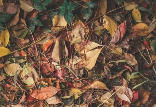 Feet Sneakers Foliage Autumn Wallpaper