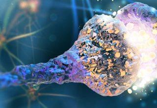 سیناپسهای مغزی