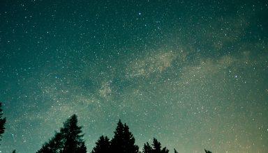 Trees Starry Sky Stars Space Wallpaper