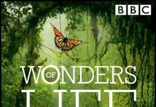 دانلود موسیقی متن سریال Wonders of Life