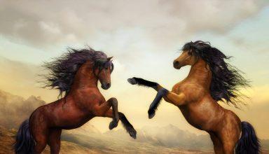 Arabian Horse Artistic Wallpaper
