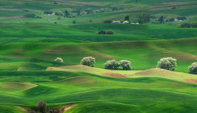 Grassland Landscape Huawei Mate 10 Stock Wallpaper