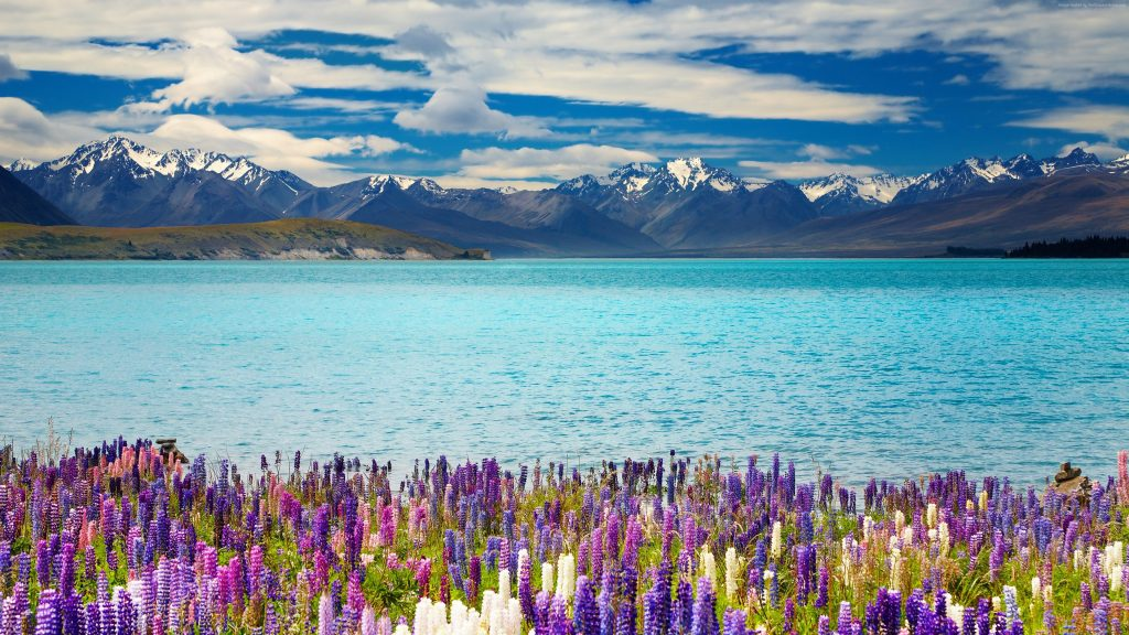 Lake Tekapo New Zealand Mountains Flower Wallpaper