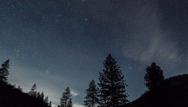 Starry Sky Night Trees Landscape Wallpaper