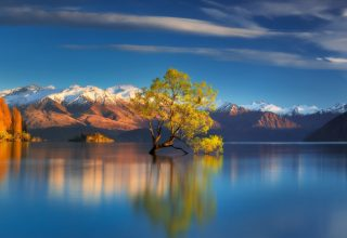 Tree in Center of Lake Reflection in Water Wallpaper