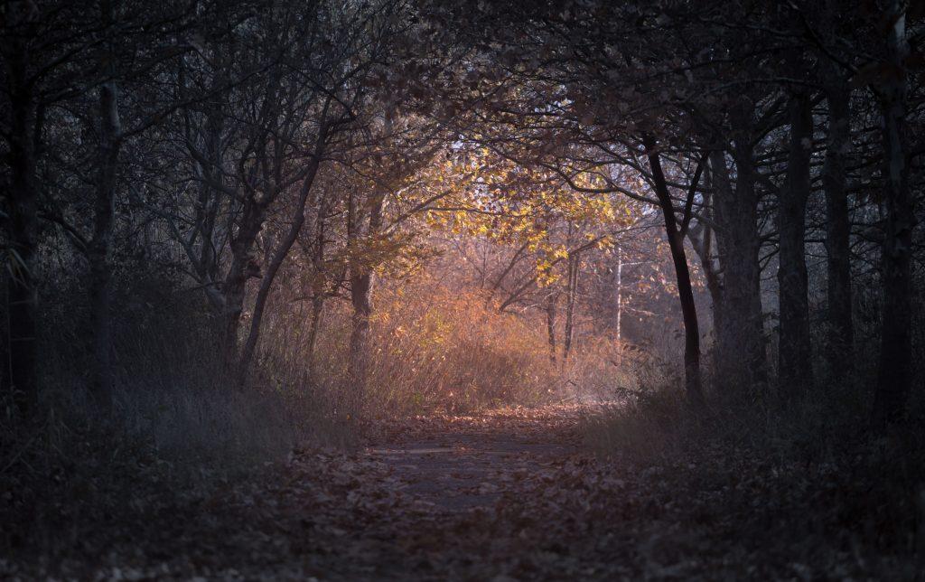 Trees Branch Pathway Dark Autumn Forest Wallpaper