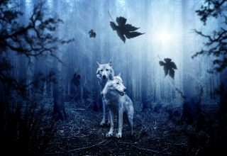 Wolves Predators Forest Photoshop Wallpaper