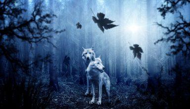 Wolves Predators Forest Photoshop Wallpaper