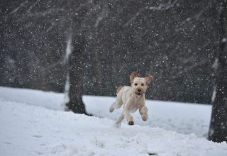 Dog Running in Snow Wallpaper