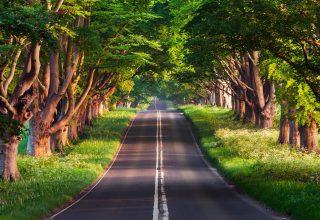 Road Trees Summer 4k Wallpaper