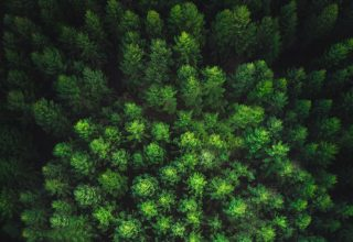 Trees Forest Top View Green Wallpaper