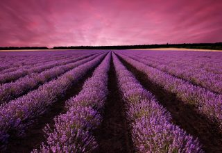 Lavender Field Sky Mountain Provence France Wallpaper