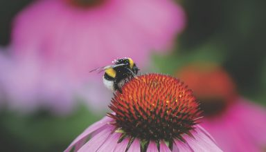 Nature Spring Flower Bee Wallpaper