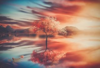 Autumn Tree Reflections Wallpaper