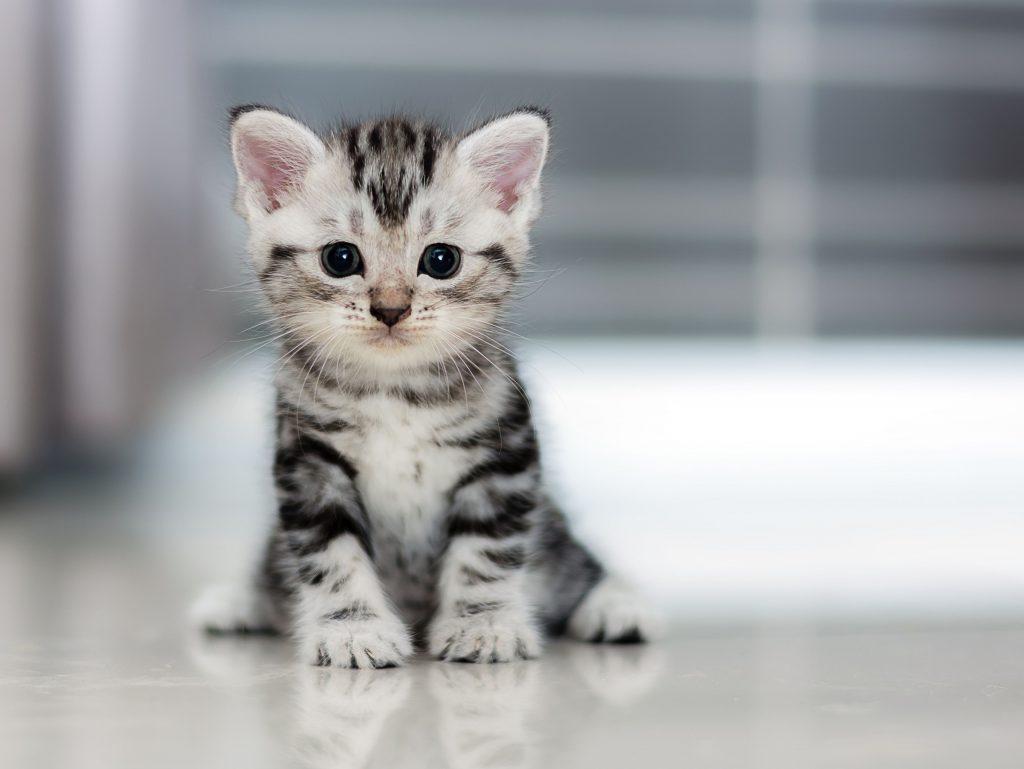 Small Kitten Wallpaper