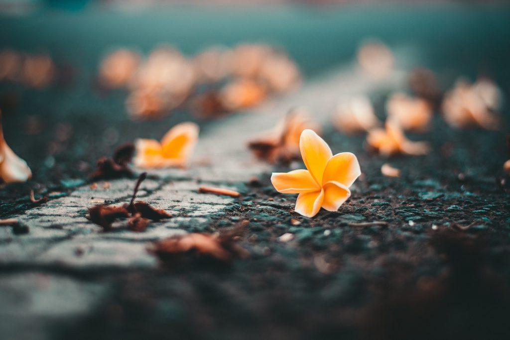 Yellow Flower on Roadside Wallpaper