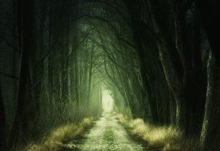 Forest Passage 4k Wallpaper