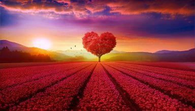 Heart Tree Field Wallpaper