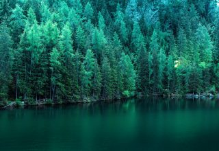 Pine Trees Along Lake 5k Wallpaper