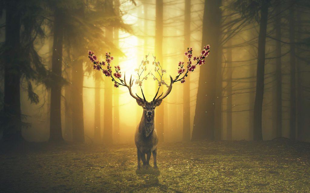 Spring Deer Forest Wallpaper