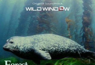 دانلود موسیقی متن فیلم Wild Window: Forests of the Sea