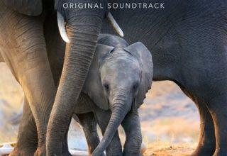 دانلود موسیقی متن فیلم Elephant