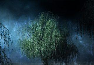 دانلود قطعه موسیقی Moonlight Willows توسط Daniel Ketchum
