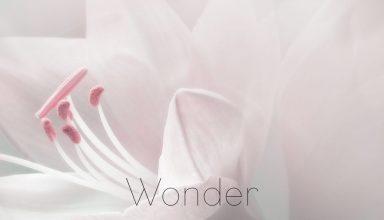 دانلود آلبوم موسیقی Wonder توسط Tiffany Hobson